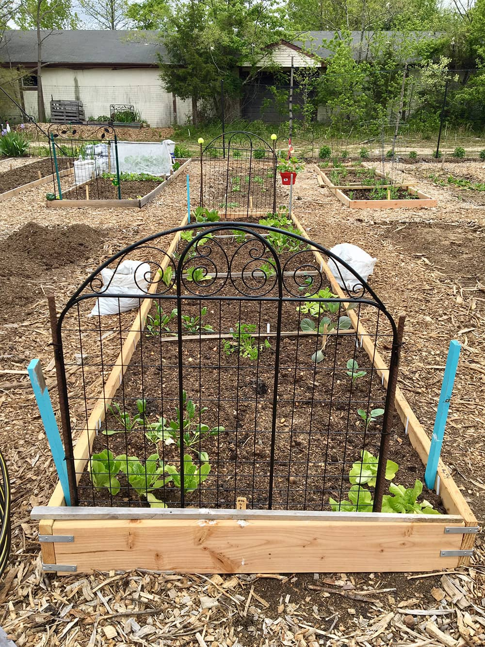Howell Organic Community Gardens Growing Strong