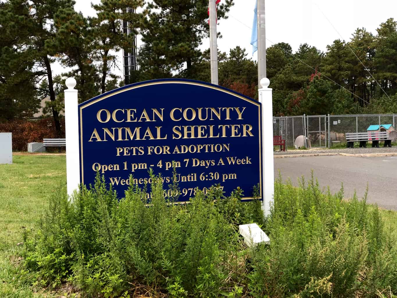 """Local Rescue Organizations Making """"Shelter Animals Count"""