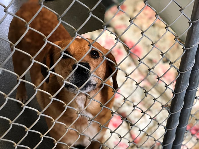 """Local Rescue Organizations Making """"Shelter Animals Count"""" 