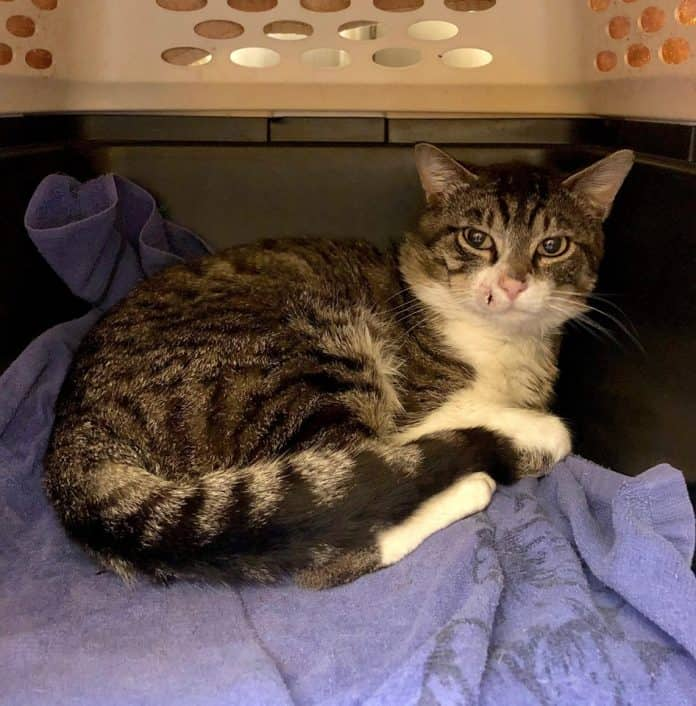 The cat was taken care of by the community and was well cared for, according to the Monmouth County Prosecutor's Office. (Photo courtesy Monmouth County Prosecutor's Office)