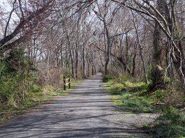 Ocean County's Barnegat Branch Trail in Waretown. (Photo courtesy Ocean County)