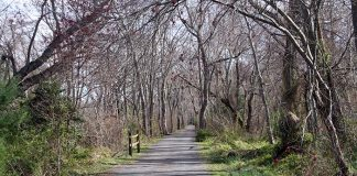 Ocean County's Barnegat Branch Trail in Waretown. (Photo courtesy Ocean County)