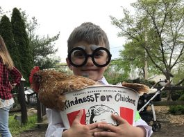 Kindness For Chickens is the Colonel's Secret Recipe. (Photo by Chris Lundy)
