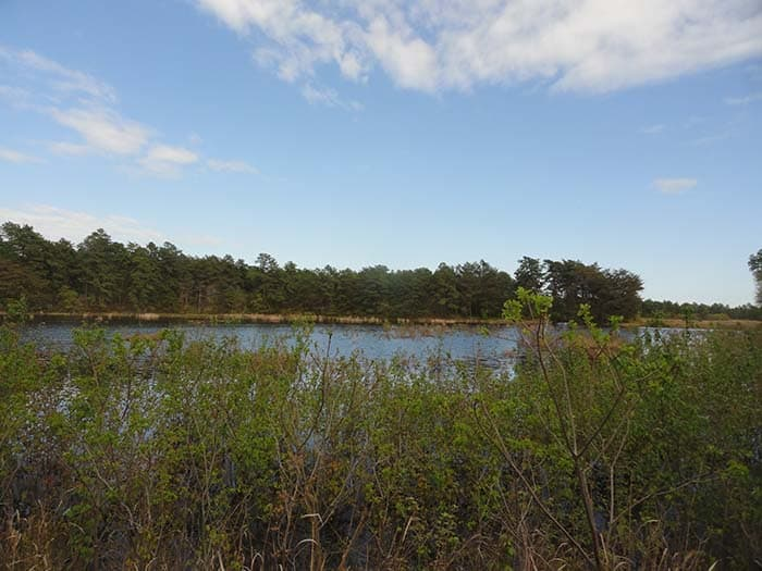 The cranberry bogs, unharvested, are more like a lake now. (Photo by Patricia A. Miller)