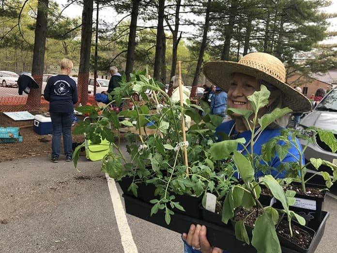 Susan Payne Gato carries some vegetables at the end of the sale. (Photo by Chris Lundy)