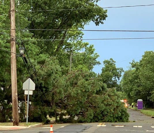 A downed tree from last night's storms in Lakehurst. (Photo by Laura Hoban)
