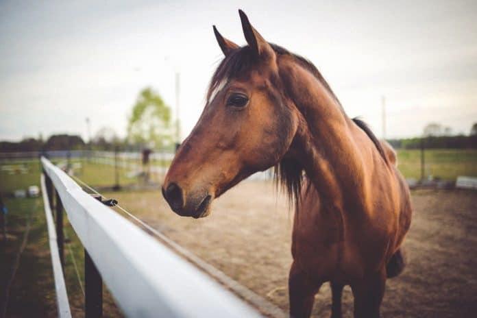 Horse. (File photo)